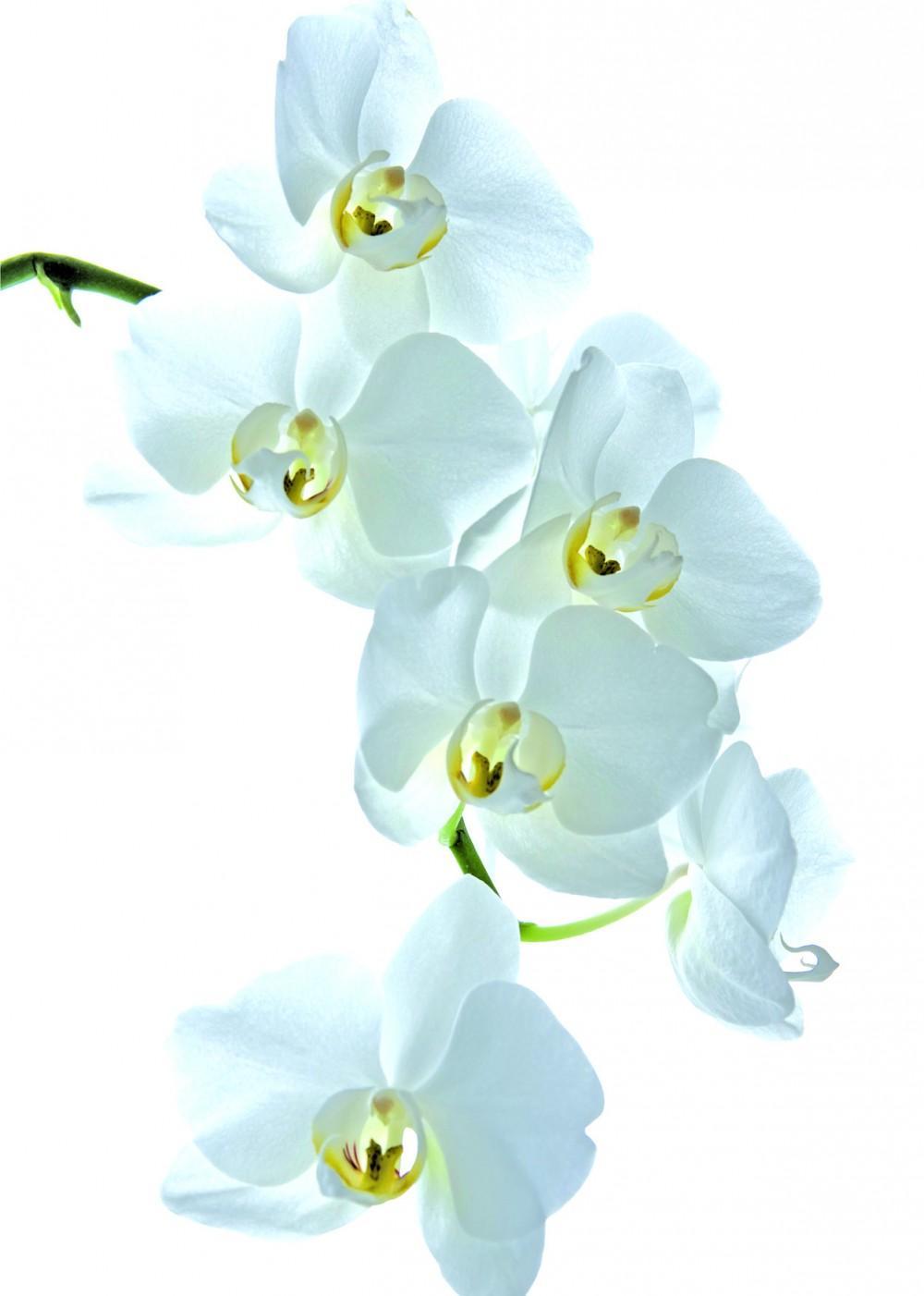 Orkidea -onnitteluadressi