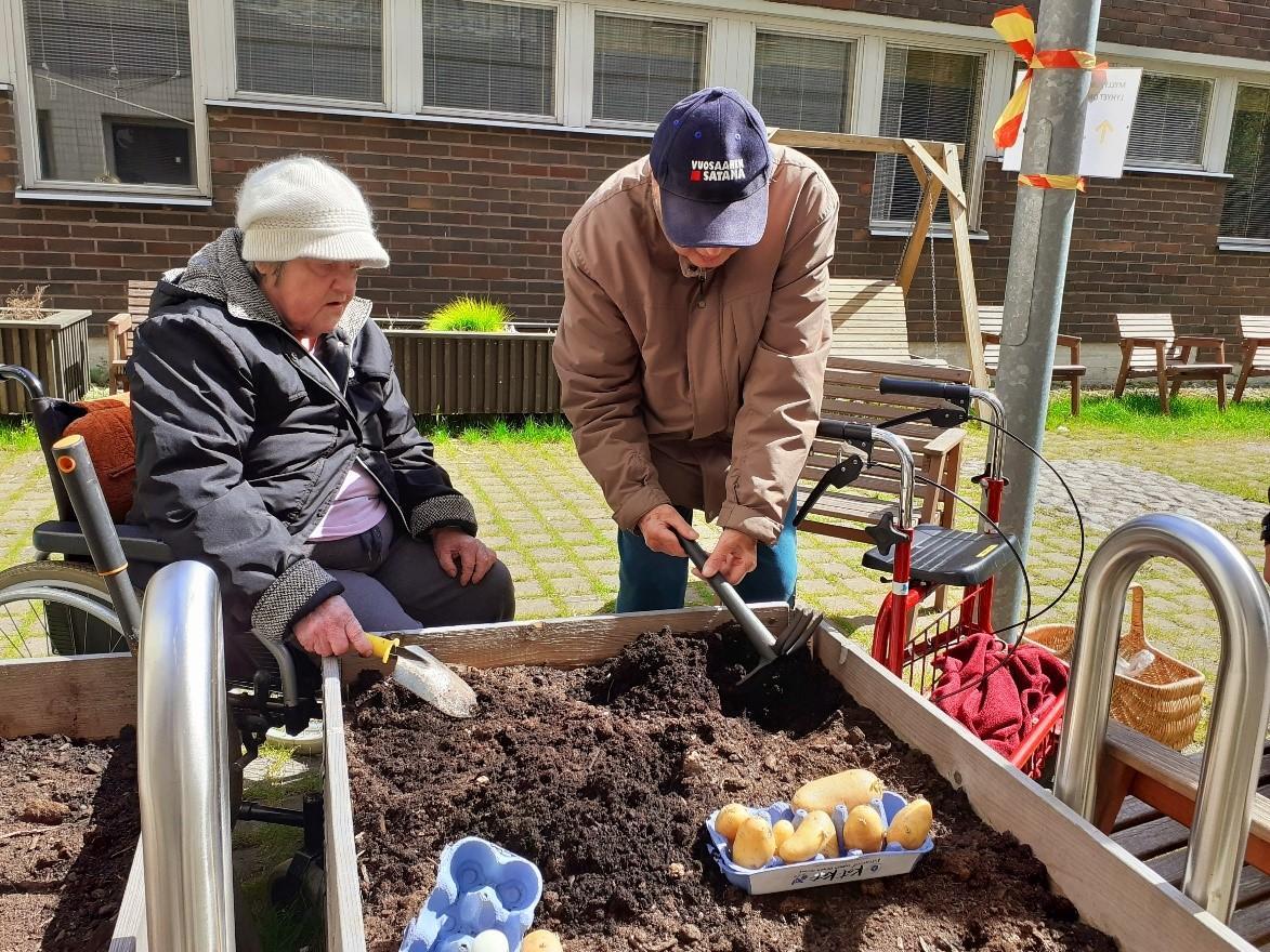 Raija ja Veikko istuttamassa perunaa talon viljelylaatikoihin.
