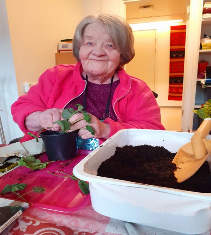 Vanha nainen istuttaa kasveja kukkaruukkuun.