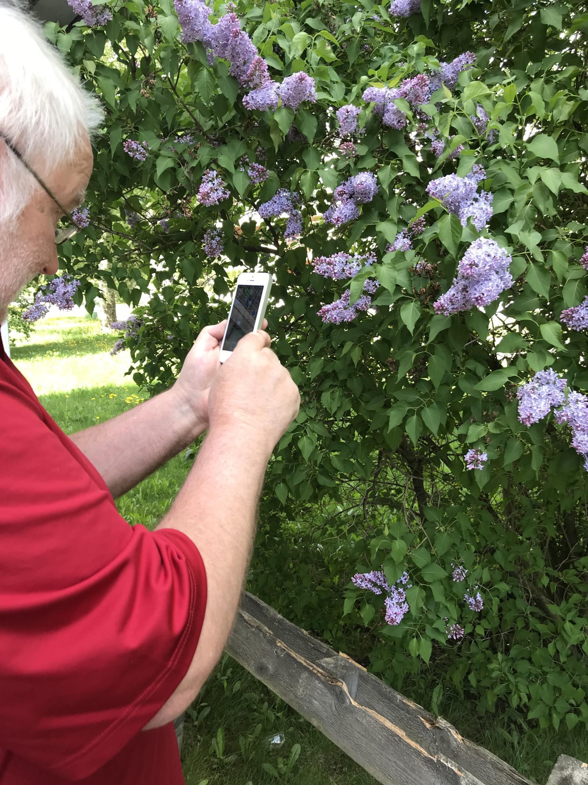 Älypuhelimella on helppo ottaa kuvia luonnosta ja kasveista.